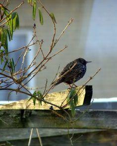 lovely bird in my garden