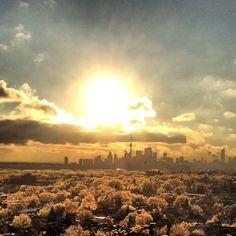#Toronto skyline during the 2013 ice storm.