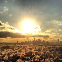 #Toronto skyline during the 2013 ice storm.