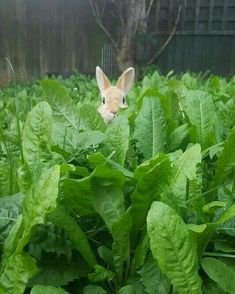 Funny Animal Pictures Of The Day - 23 Pics Farm Animals, Animals And Pets, Funny Animals, Cute Animals, Baby Bunnies, Cute Bunny, Easter Bunny, Happy Easter, Adorable Bunnies