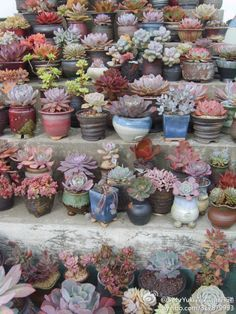 hand crafted pots for succulents - Google Search Succulents In Containers, Succulents Garden, Planting Flowers, Succulent Arrangements, Succulent Gardening, Garden Plants, Sempervivum, Crassula, Echeveria