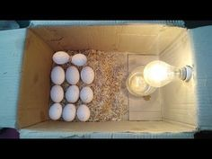 How To Make Egg incubator at Home without temperature controler Egg Hatching Machine, How To Make Eggs, Egg Incubator, Electronic Circuit Projects, Poultry, Fence, Mary, Diy Projects, Animation