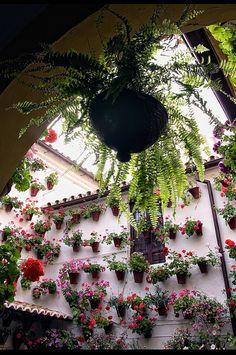 """La fiesta de los patios en Córdoba / """"Los Patios"""", party of flowers in Cordoba, Spain. by Juan Jose Ferres (via Flickr) www.costatropicalevents.com"""