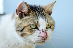 Boss of Stray Cats of Hard Life   Flickr - Photo Sharing!