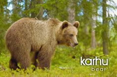 Finnish words > Finlands national animal