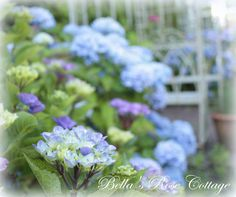 Bella's Rose Cottage: Summer Garden...
