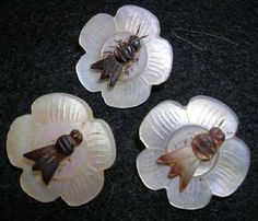 Mother-of-pearl insect buttons.