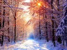 Winter Wallpaper - Bing Images