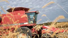 Germany's Bayer raises its offer for Monsanto to $65bn (£49bn), or $127.50 a…