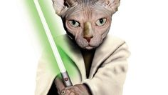 Star Wars - Star Wars 7 - The Force Awakens - Jedi Cats - Star Wars Cat star wars cats - jedi cats - jedi kittens - star wars cat - jedi cat cat st. Funny Texts Pregnant, Funny Texts From Parents, Star Wars 7, Funny Test, Youtube Cats, Funny Disney Memes, Funny Christmas Cards, Funny Dog Pictures, Star Wars Humor