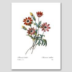 Impression dArt anémones (Images non inclus) Expédié en 24 heures !  Voir tous les 35 Redoute fleurs: http://etsy.me/1DXe2tn Découvre des fleurs rouges: http://etsy.me/2aB4vxQ  ✔ Nouvelles 8 x 10 ou 11 x 14 pouces «Etoile de Anemone (Anemone Star)» fine impression d'art d'une peinture de fleur du 19ème siècle par maître peintre et botaniste Pierre redouté (1759-1840). Artiste de Cour de la Reine Marie Antoinette, ses tableaux accrocher dans les musées et pala...