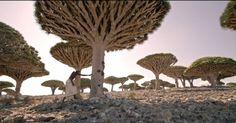 [VIDEO] Socotra lîle magique au large du Yemen