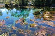 Te Waikoropupū Springs are the largest freshwater springs in New Zealand, the largest cold water springs in the Southern Hemisphere and contain some of the clearest water ever measured.