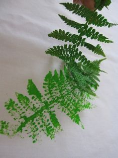 Fern and leaf printing. Think this will be a good camping activity with the kids!