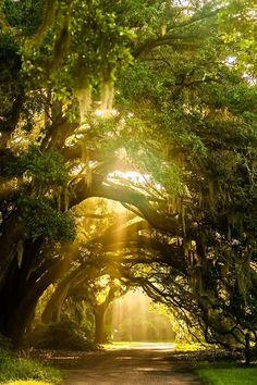 Charleston Tea Plantation, Charleston, S. via Explore Charleston Beautiful World, Beautiful Places, Beautiful Pictures, Zen Pictures, Beautiful Forest, Beautiful Scenery, Beautiful Landscapes, Beautiful Nature Photography, Landscape Photography