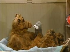 Alf and a sock puppet |Pinned from PinTo for iPad|