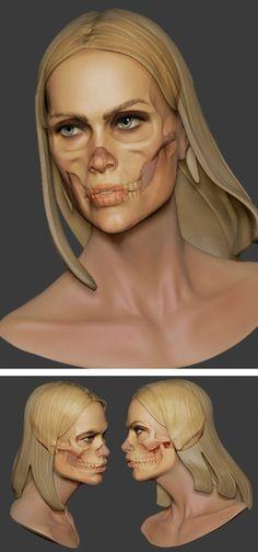 Anatomy Drawing Female Female Skull Study created with ZBrush Facial Anatomy, Head Anatomy, Anatomy Poses, Body Anatomy, Anatomy Of The Face, Human Skull Anatomy, Anatomy Sketches, Anatomy Drawing, Anatomy Art