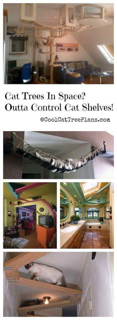 ♥ Cool Cat Furniture ♥ Build a cat gym on your ceiling with cat shelves. The cat tree is how the cats get up to it. #CatTree