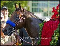 The `2015 Kentucky Derby winner AMERICAN PHAROAH. A heartfelt congratulations to his connections!