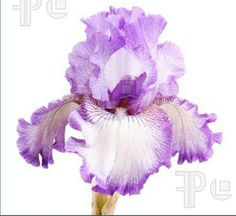 These are great flowers for the bouquets...can also use for boutinniere