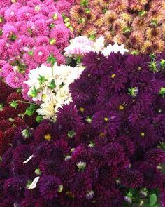 Amazing Flowers, Pretty Flowers, Flower Arrangements Delivery, Dahlia Flower, Dahlias, Native Plants, Bay Area, Garden Projects, Summer Collection