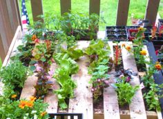 what to make out of pallets | just waiting for the roots to take hold amongst other