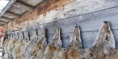 #Petition  Tell Canada Goose to Stop Using Fur!