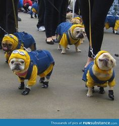 French bulldog minions..I don't like dressing dogs up, but Gambit would look pretty cute as a minion!