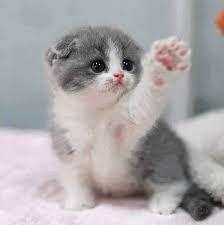 Afbeeldingsresultaat voor cute animals