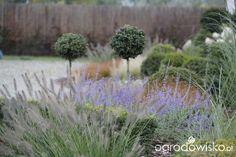 Ogród nie tylko bukszpanowy - część II - strona 683 - Forum ogrodnicze - Ogrodowisko