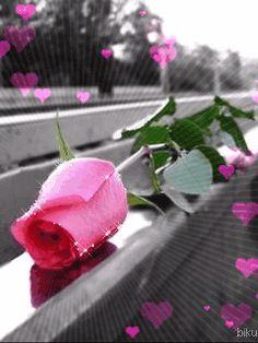 ღ Rose Animation ღ Flowers Gif, My Flower, Pretty Flowers, Pretty In Pink, Flower Power, Beautiful Gif, Beautiful Roses, Wonderful Flowers, Animiertes Gif