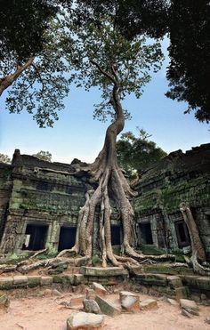 Ta Pnom temple, Angkor complex, Cambodia…