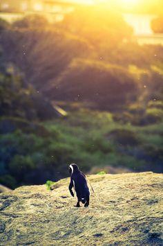 Pinguin promenade by Marc Wegner on 500px