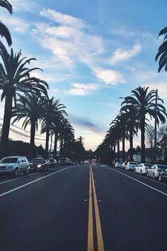 #way #palmera