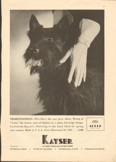 1935 Kayser Win Bars Gloves ad featuring a cute terrier. #vintage #1930s #gloves #dogs