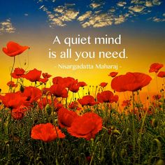 Quiet the mind...