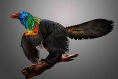 Scientists Discover 161 Million-year-old 'Rainbow Dinosaur' With Iridescent Feathers