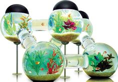 The Age Of Aquariums: The £3,900 Fish Tank
