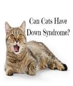 The claim that some cats have Down Syndrome probably stems from the fact that there are cats born with unusual features, including slanted eyes, like Kenny the tiger had, a flat nasal bridge Down Syndrome Cat, Cat Diseases, Sad Cat, Cat Signs, Grumpy Cat, Big Cats, Kitten, Stems, Dogs