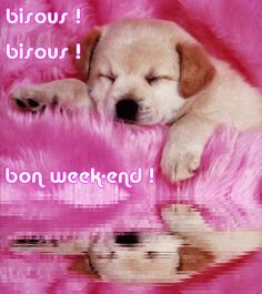 bon week-end! Bon Weekend, Bon Week End Image, Jolie Photo, How To Get Rich, C'est Bon, My Dream, Minions, Labrador Retriever, Corgi