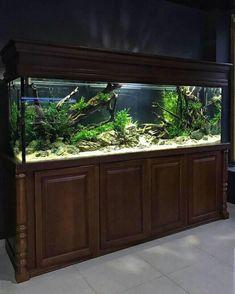 Planted Aquarium, Aquarium Garden, Aquarium Landscape, Nature Aquarium, Home Aquarium, Aquarium Design, Aquarium Fish Tank, Large Fish Tanks, Tropical Fish Tanks