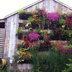 A vertical garden of flowers.    #flowers #gardening #verticle