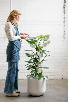 Stackwood is an exciting creative venue and concept store in Fremantle WA. Housed in a former diesel workshop, the Stackwood community encompasses maker's studios, an event space and a concept store.   The crew rock our Harvest Denim Aprons while using their green thumbs... they know their plants, and can even available to help you green up your space!🍃🌴| Gardening Apron | Plant Nursery | Indoor Plant