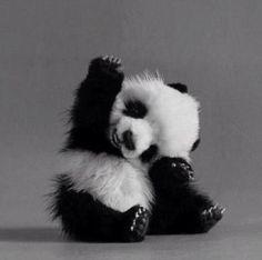 super cute panda bear o.O