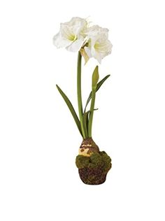 Napa Home  Garden Aramaryllis DropIn Flowering Plant 29Inch White * Find out more about the great product at the image link.