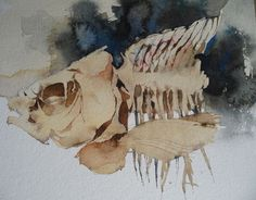 watercolours and oils of still life, animals and natural history