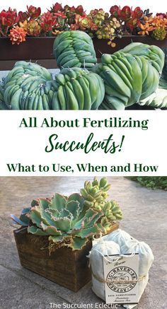 Learn all about the best fertilizers to use for your succulents, how to use them, when and how often! #succulentcare #succulentfertilizer #bestfertilizerforsucculents #organicfertilizer