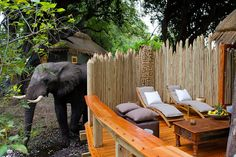 The Jao camp is the perfect last minute holiday retreat. Hidden deep in the heart of the Okavango Delta, the camp is the perfect balance of adventure and luxury. Best of all there are huge deals for families looking to travel this year. Visit http://www.safari.co.uk/discover-africa/botswana/ to find out more.