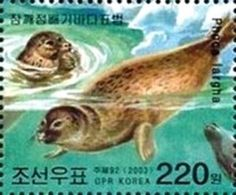 Spotted Seal (Phoca vitulina largha)