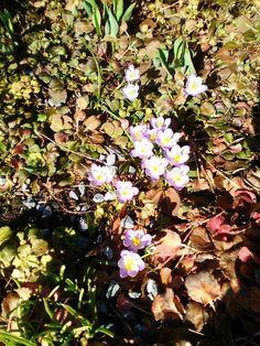 Mine bilder Plants, Pictures, Plant, Planets